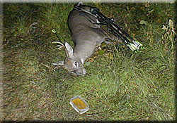 Harvested Whitetail Buck laying next to Buck Magic scent tray
